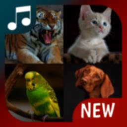 Image of animal sounds for phone, animal ringtones app