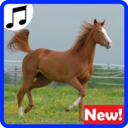 Image of Horses Sounds for Cell Phone free.