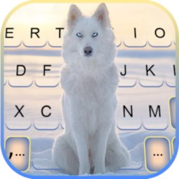 Image of Snowy Wolf Keyboard Background