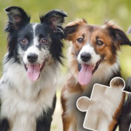 Image of Dogs & Cats Puzzles for kids & toddlers 🐱🐩 🐾