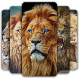 Lion Wallpaper 🦁 icon