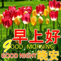 Image of Chinese Good Morning Noon Good Night Love