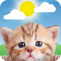 Image of Weather Kitty