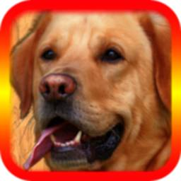 Image of Translator For Dogs