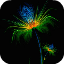 Amazing Colorful Flower Live Wallpaper