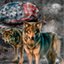 Download American Wolves Live Wallpapers for Android phone