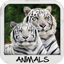 Download Animal Wallpapers for Android phone