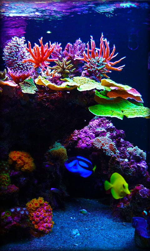 Live Aquarium Wallpaper Aquarium live wallpaper