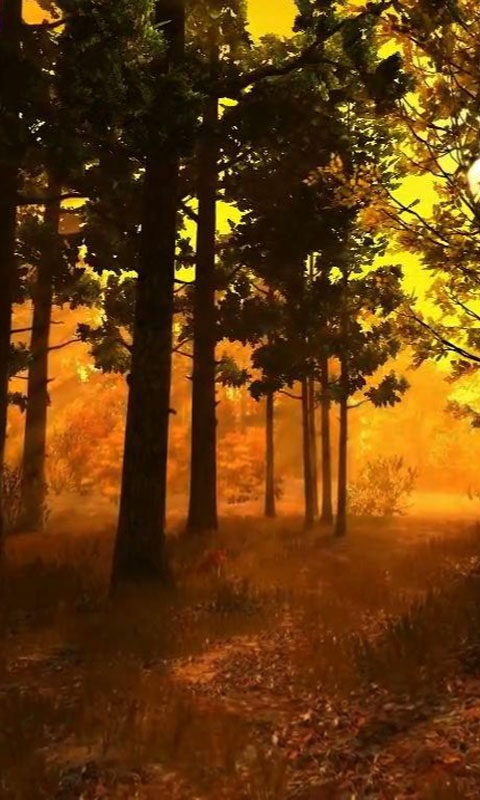 Download Autumn Forest Live Wallpaper