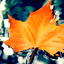 Download Autumn Leaf Live Wallpaper for Android phone