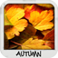 Download Autumn Wallpapers Free for Android phone