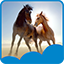 Beautiful Horses Live Wallpapers