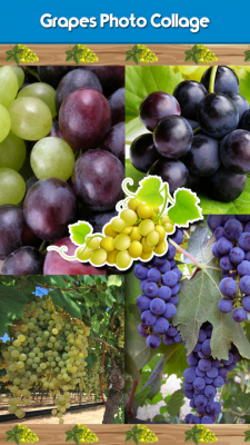 Best Grapes Photo Collage screenshot 1