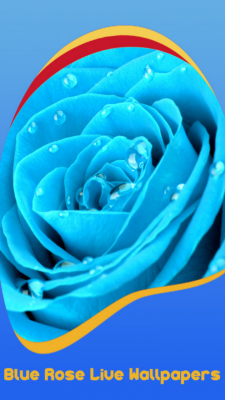 Blue Rose Live Wallpapers screenshot 1
