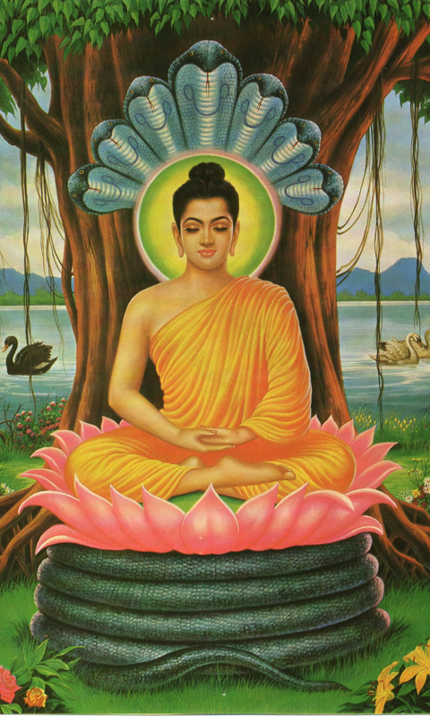 buddha-wallpapers.2.png (480×800)