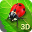 Image of Bugs Life 3D Live Wallpaper