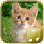 Download Cats sounds for Android phone