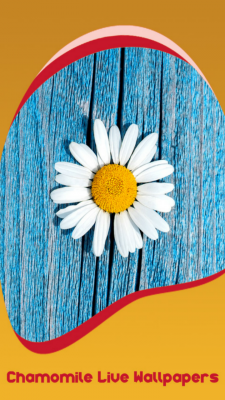 Chamomile Live Wallpapers screenshot 1