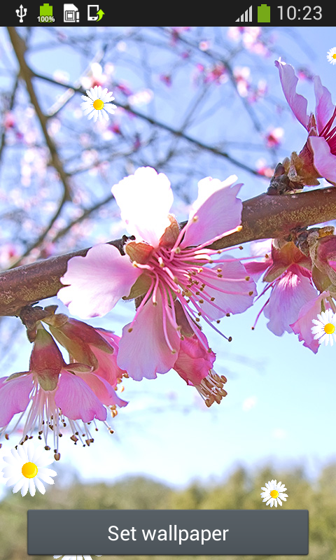 Cherry Blossom Live Wallpapers Android App - Free APK by ...