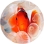 Download Clownfish Live Wallpaper for Android phone