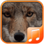Download Coyote Sounds for Android phone