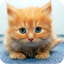 Download Cute Animals for Android Phone