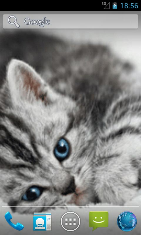 Download Cute Cat Live Wallpapers