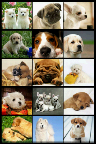 Email Wallpaper Gmail  1Very Cute Puppies Wallpapers