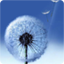 Dandelion live wallpaper Android App - Free APK by droidcounty