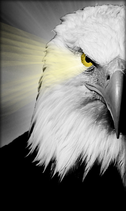 <b>Eagles Wallpapers</b> - Android Apps on Google Play