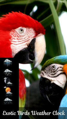 Exotic Birds Weather Clock screenshot 1