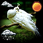Download Exotic Birds Weather Clock for Android phone