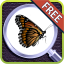 Image of EyeSpy Butterfly Difference Game
