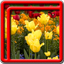 Flowers Live Wallpapers Best