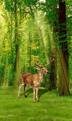 Forest in deer livewallpaper android app free apk by fun and full - Hunting wallpaper for android ...