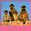Funny Monkey Live Wallpapers