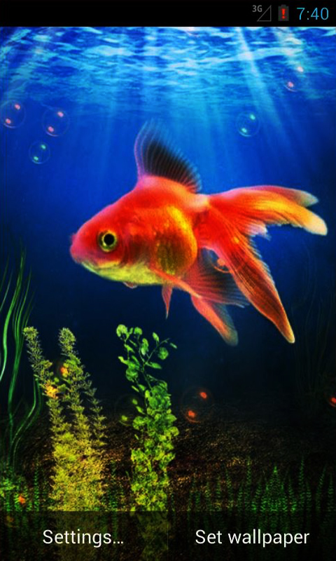 Download Goldfish Live Wallpaper