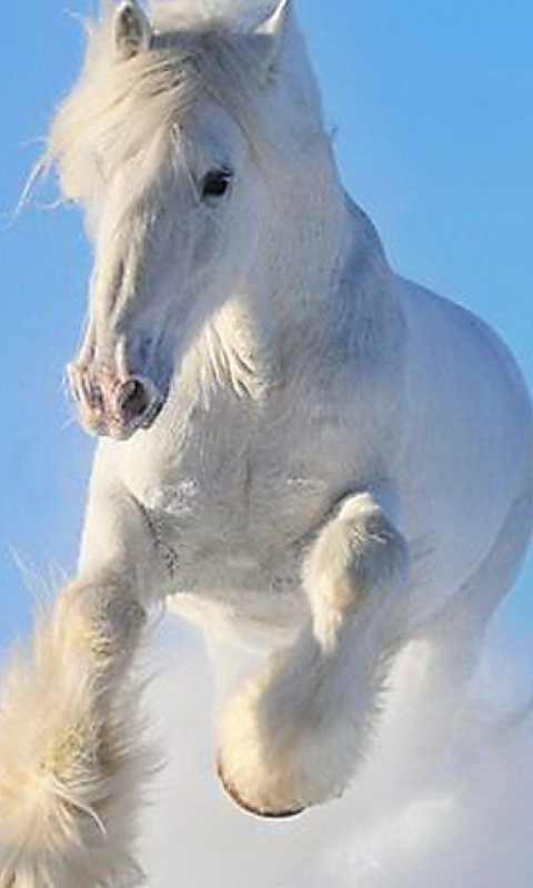 Horse Wallpapers Free Android App Android Freeware