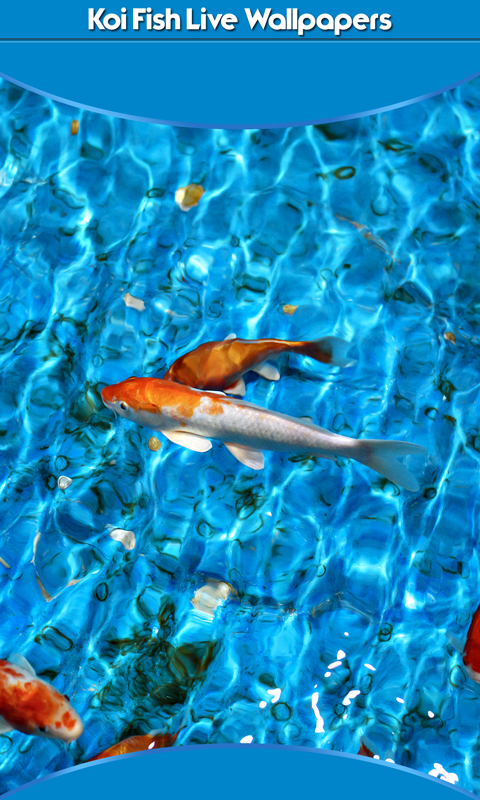 Koi Fish Live Wallpapers New Free Apk Android App