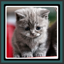 Live Wallpapers Kittens
