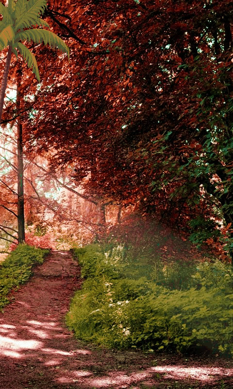 Nature Wallpaper Free free app download - Android Freeware
