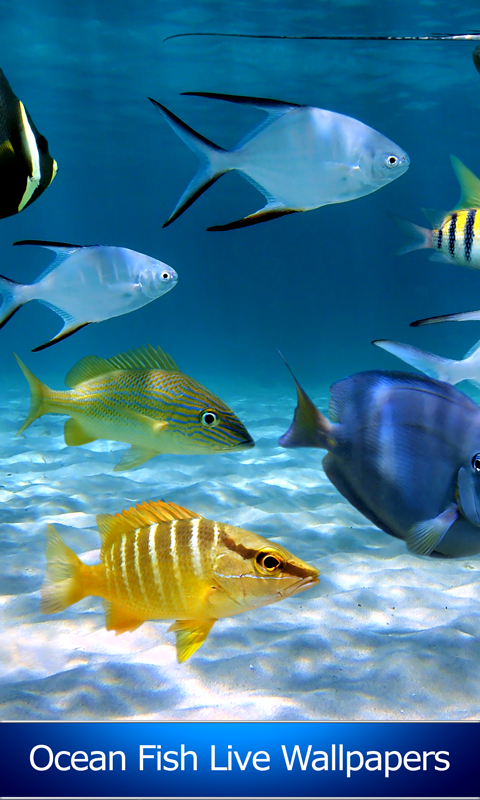 Ocean Fish Live Wallpapers Free Apk Android App Android