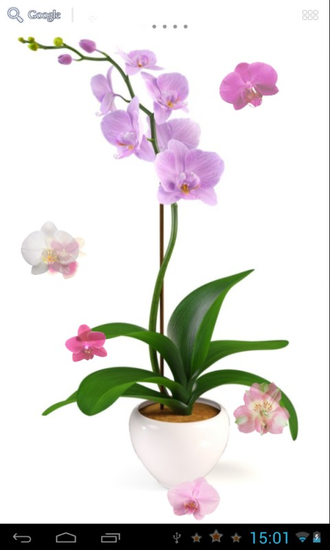 Download Orchids Live Wallpaper