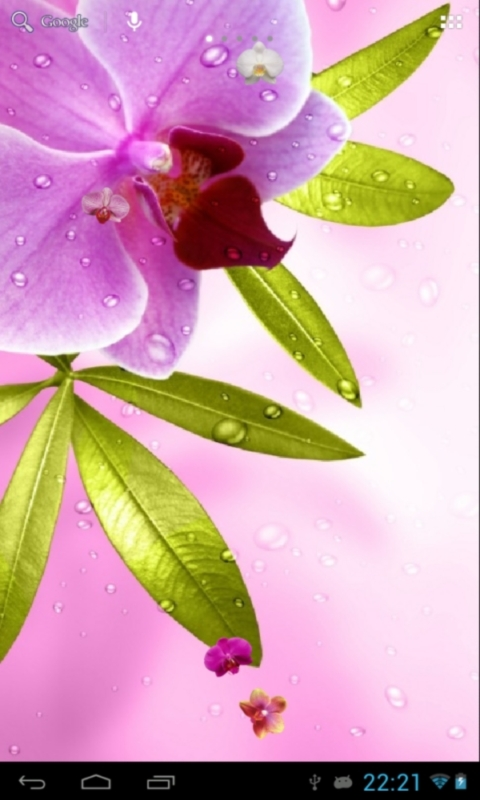 Live Wallpapers Free Download For Mobile Orchids live wallpaper