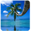 Download Palm tree over sea for Android phone