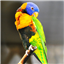 Download Parrots Live Wallpaper for Android phone