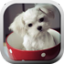 Download Puppy in a Cup LWP for Android Phone
