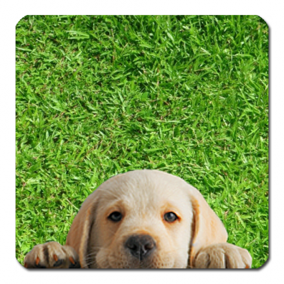 Image of Puppy Puzzle Game