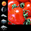Download Soft Tomato Clock Widget for Android phone