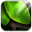 Image of Tap Leaves Live Wallpaper Free